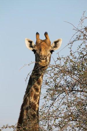 Pondoro Game Lodge: Many animals on safari