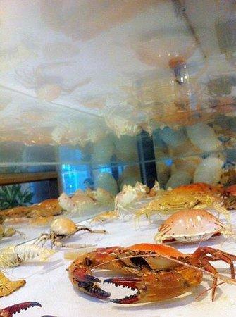 Sea Residence : 民宿收藏:螃蟹標本