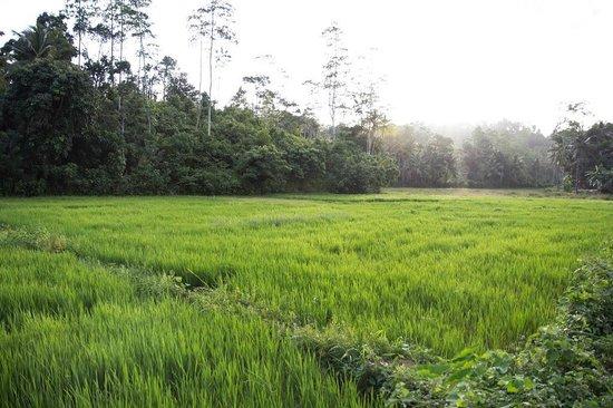 Idle Tours: Rice paddies