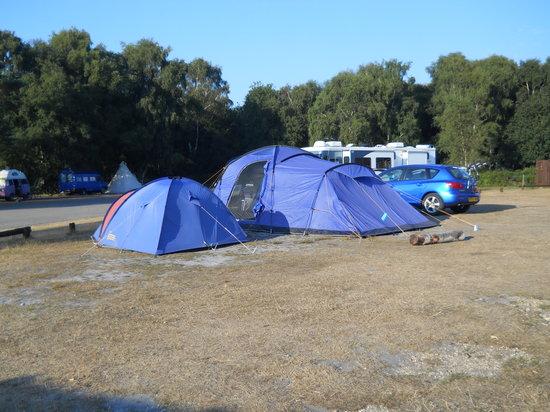 Holmsley Campsite: Stony pitch