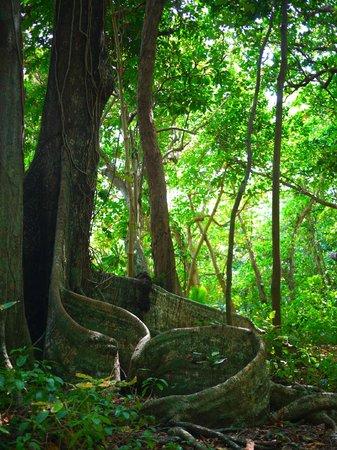 Bokissa Private Island Resort: jungle walk