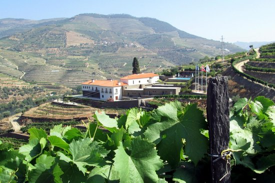 Quinta do Pego: From the vineyard