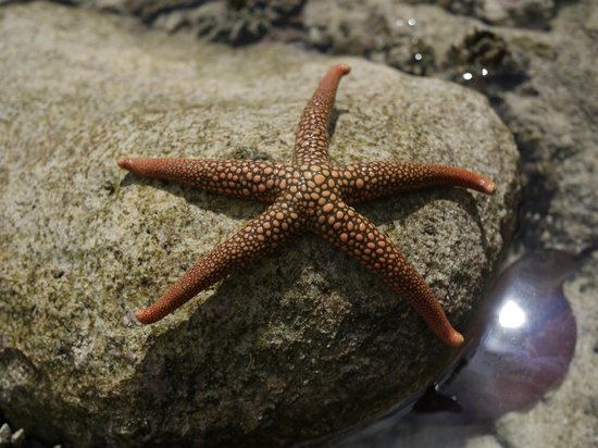 Bokissa Private Island Resort: Starfish at rockpools low tide