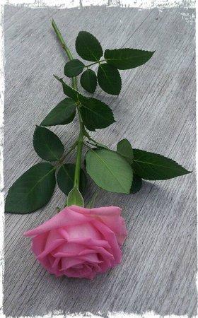 Dornröschenschloss Sababurg: Roses on a bed of roses