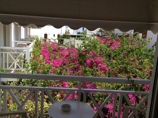 Apollon Boutique Hotel: La vue du jardin à travers la moustiquaire