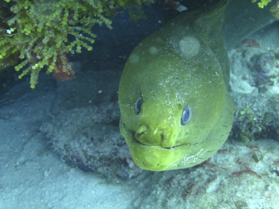 Southern Cross Club: up close with a moray eel