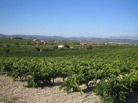 Burricleta Penedés Garraf: paisaje de viñas
