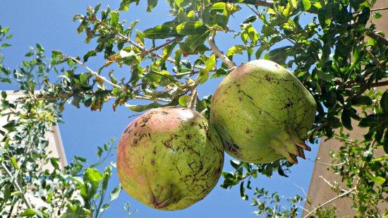 Avra Hotel: Granatäpfel