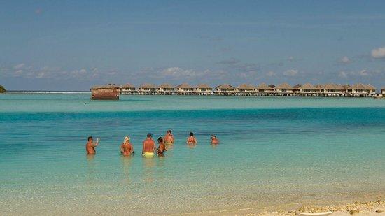 Cinnamon Dhonveli Maldives: trying to spot sharks
