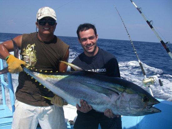 Buena Vista Sportfishing : atun, yellowfin tuna