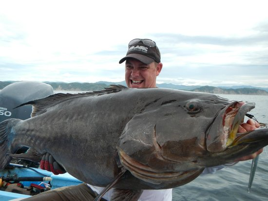 Buena Vista Sportfishing: mero