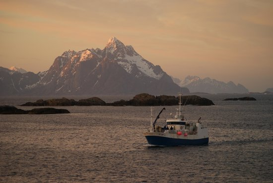 Lofoten Island: Retour de pêche aux Lofoten