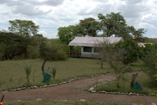 Mara Eden Safari Camp: tent
