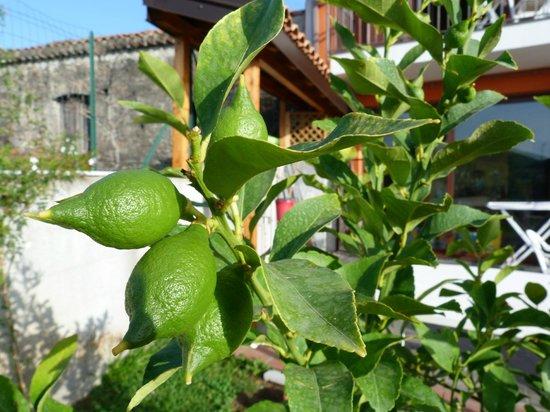 La Porta dell'Etna: Le citronnier du jardin