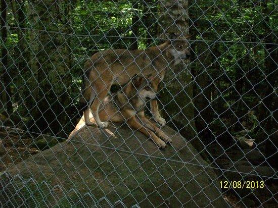 La Maison des Loups : parc aux loups, orlu