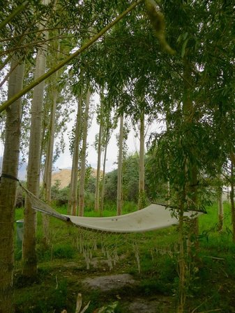 Ladakh Sarai: There are a few hammocks around