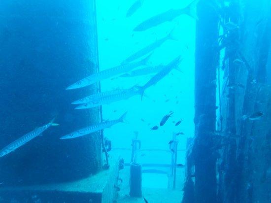 Aquatica: Barracuda by the funnel of tug boat Rozie