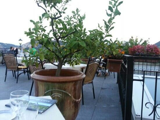 Hotel Restaurant La Porte des Cevennes: Citronnier sur la terrasse