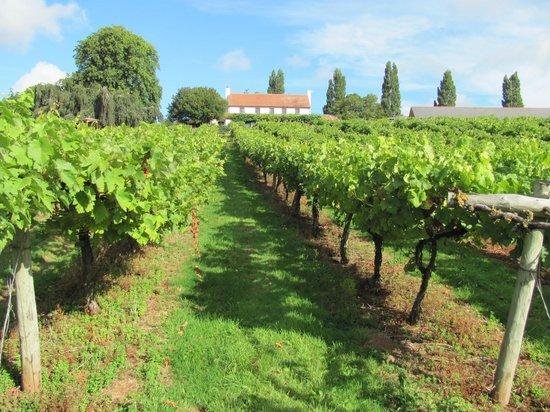 Three Choirs Vineyards : View from vineyard walk up to restaurant