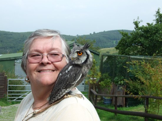 Falconry Experience Wales: Friends 2