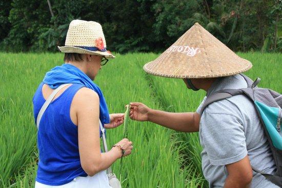 Bali Homestay: Wayan & My Wife
