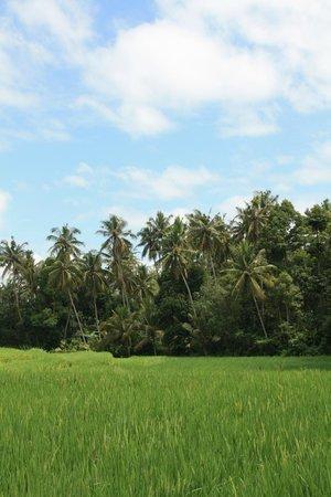 Bali Homestay: Surroundings of Wayan Village