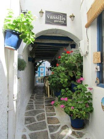 Taverna Vassilis : Vassilis garden
