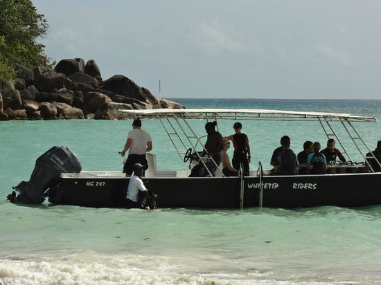 Whitetip Divers: Heading out