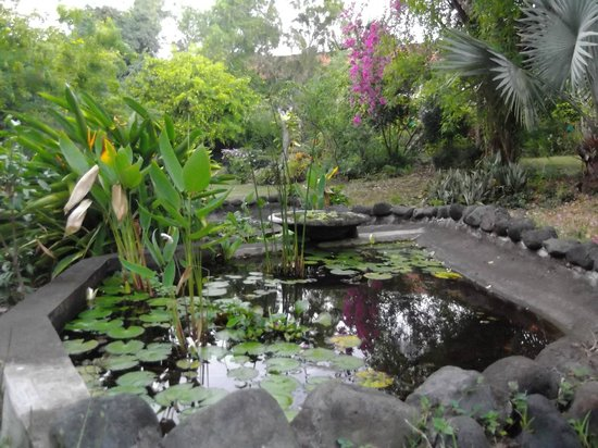 Udayana Kingfisher Eco Lodge: lily pond
