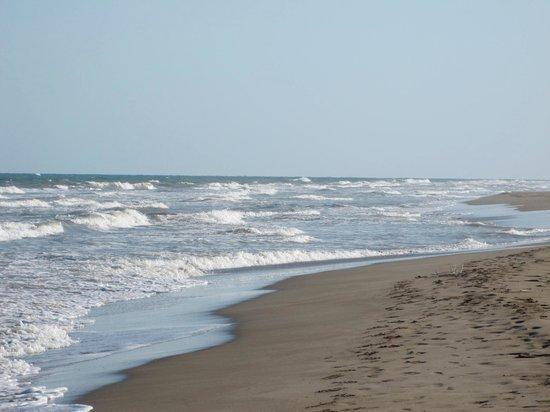 Hostal La Panavera: Beach near the delta