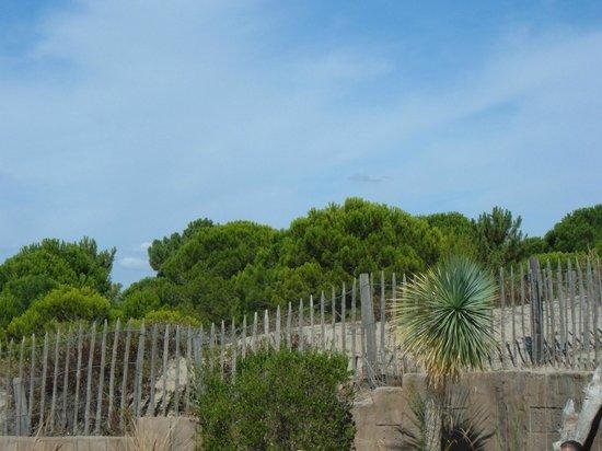 Yelloh ! Village Secrets de Camargue : dunes autour de la piscine