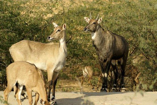 Safari Park: View of safari area