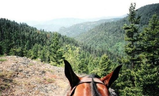 Pegasus Riding School & Trail Rides: Boo Boo and the view