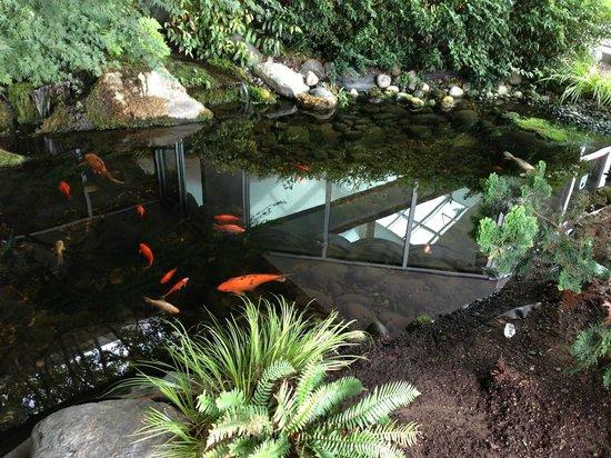 Medallion Hotel: Koi pond