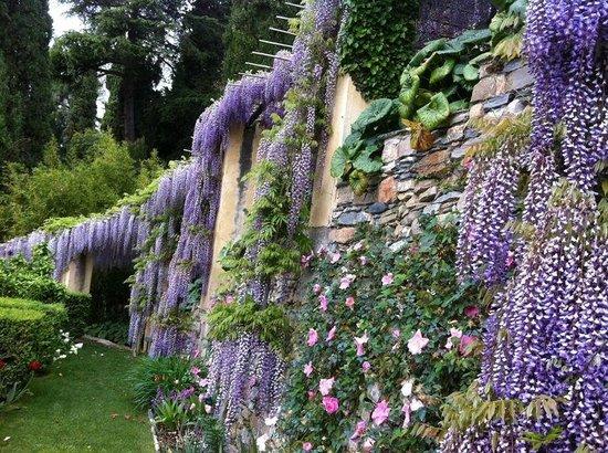 Villa della Pergola: bellissimo giardino