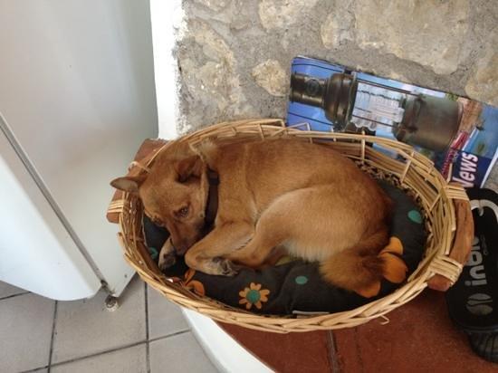 """Agriturismo """"Il Giardino di Vigliano"""": dog WELCOME"""