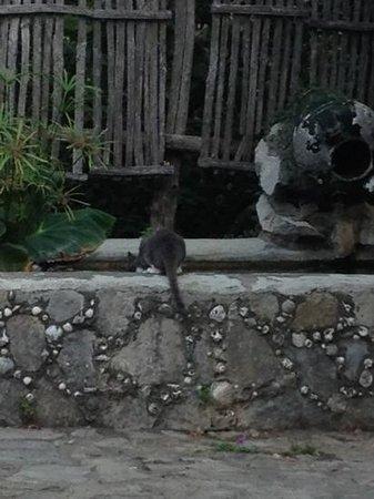 """Agriturismo """"Il Giardino di Vigliano"""": gatto"""