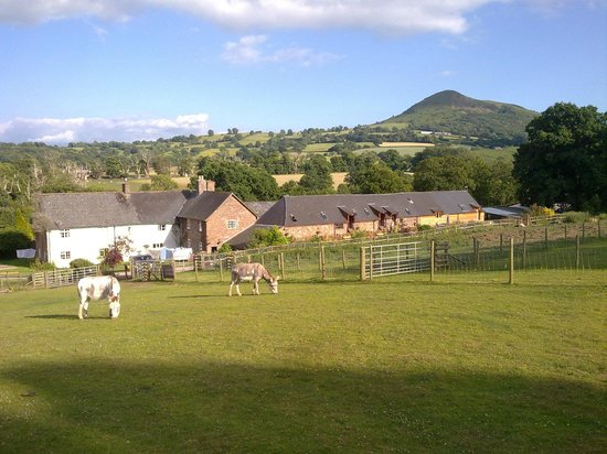 Pen-Y-Dre Farm Holidays: View from Donkey Field