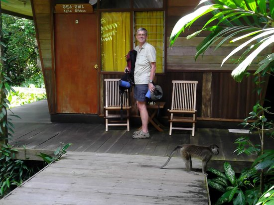 Rimba Orangutan Eco Lodge: room verandah on board walk