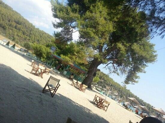 Sithonia, กรีซ: the tables under the pine trees