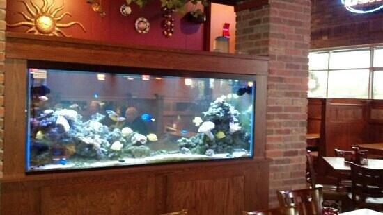 The Phoenix: Great Fish Tank!