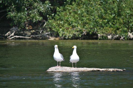 Klamath River Jet Boat Tours : buddies