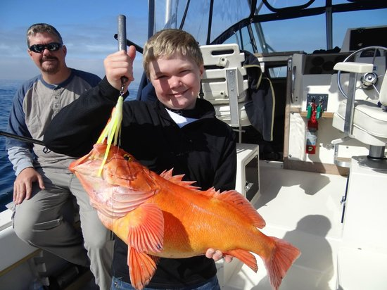 Bear Cove Cottages : Yellow eye snapper
