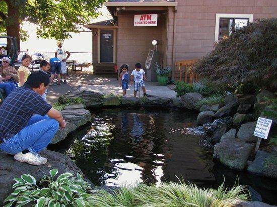 Swan Island Dahlias : Koi pond