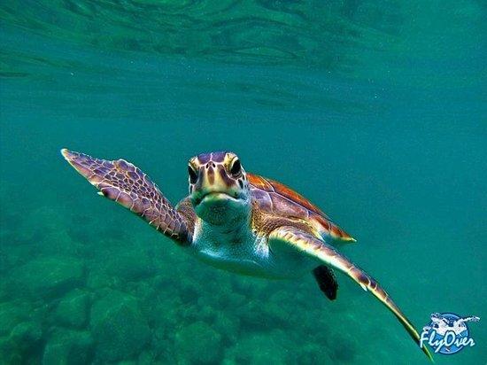 FlyOver : Las tortugas…. Nuestra inmersión por excelencia.