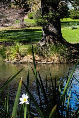 Auckland Domain : Duck pond