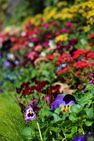 Auckland Domain : Spring blooms in the Winter Gardens
