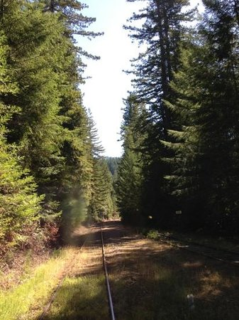 Skunk Train : on the way (Willits - Northspur)