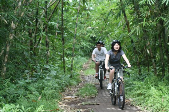 Bali Grace Cycling: bamboo forest cycling tour