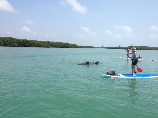 SUP Englewood : Amazing moment! Mother's day with dolphins.